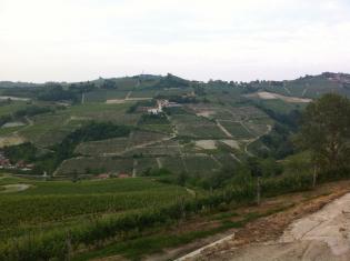Barbera Red Wine
